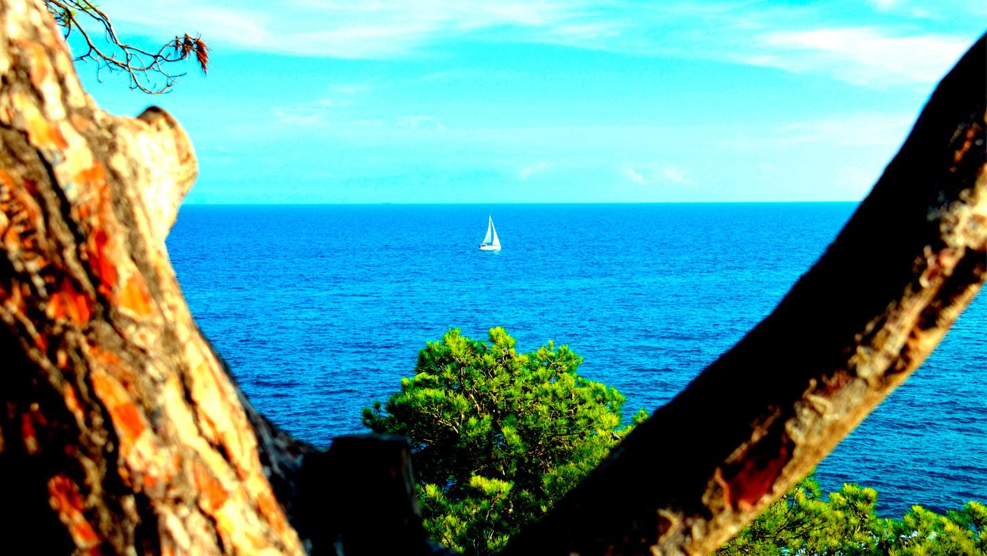 Veler entre arbre amb vista a la mar